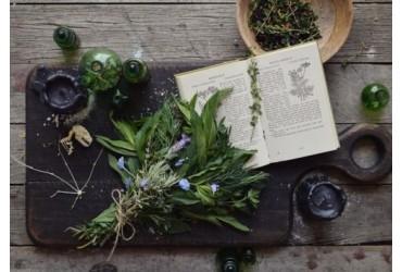 10 Consigli per iniziare la pratica d'Erboristeria